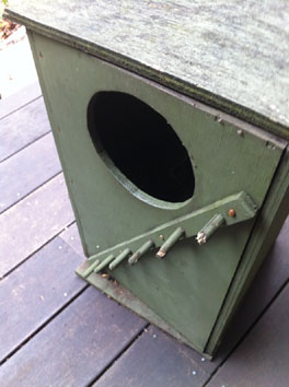 Snake hiding in possum box